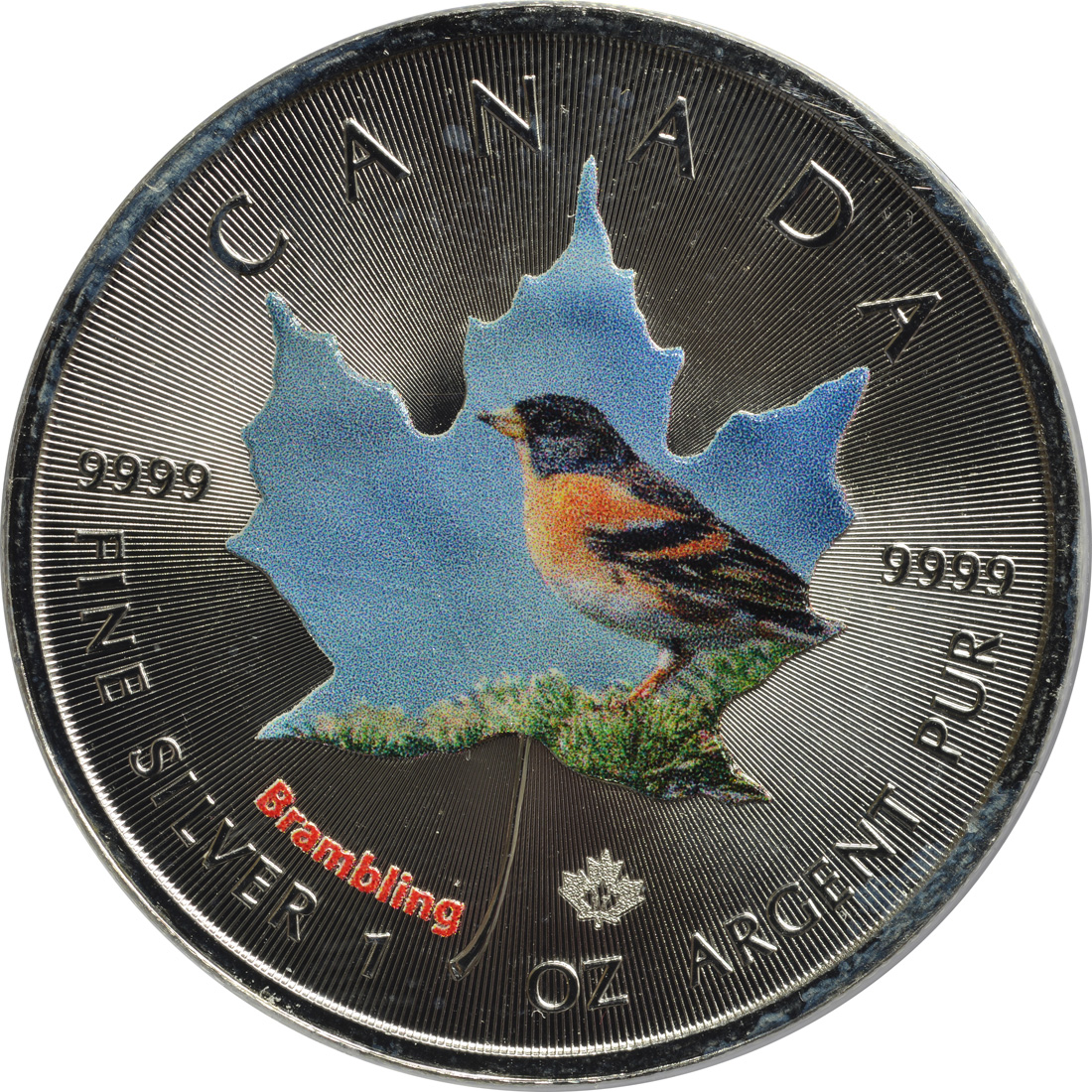 Vorderseite :Kanada : 5 Dollar Maple Leaf - Vögel - Brambling  2017 Stgl.