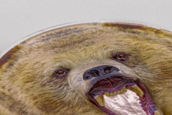 Zertifikat:Tansania : 1500 Schilling Grizzly Bear   2020 PP