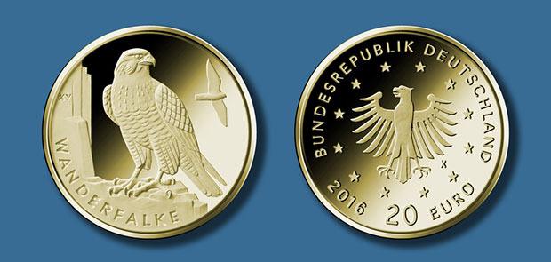 2019-goldmuenze-wanderfalke.jpg