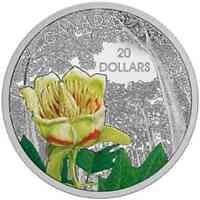 Kanada : 20 Dollar Kanadische Wälder - Karolingischer Tulpenbaum - farbig  2015 PP