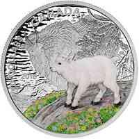 Kanada : 20 Dollar Tierbabies - Bergziege - farbig  2015 PP
