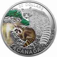 Kanada : 20 Dollar Tierbabies - Wasschbär  2016 PP