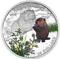 Kanada : 20 Dollar Tierbabies - Waldmurmeltier  2016 PP