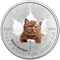 Kanada : 5 Dollar Maple Leaf - Katzenbabies - British Shorthair  2017 Stgl.